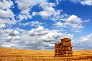field-under-a-cloudy-sky-1357611-m